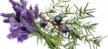 Lavender-Juniper-Berry-220x100