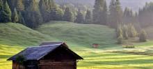 Meadow--220x100