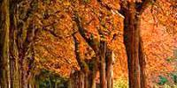 autumn-200x100