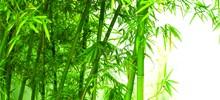 bamboo-web-220x100