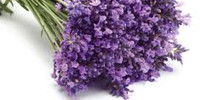 lavender-200x100