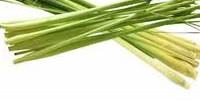 lemongrass-200x100