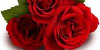 roses-200x100